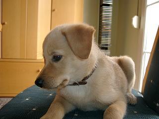 Laila - saving-dogs eV