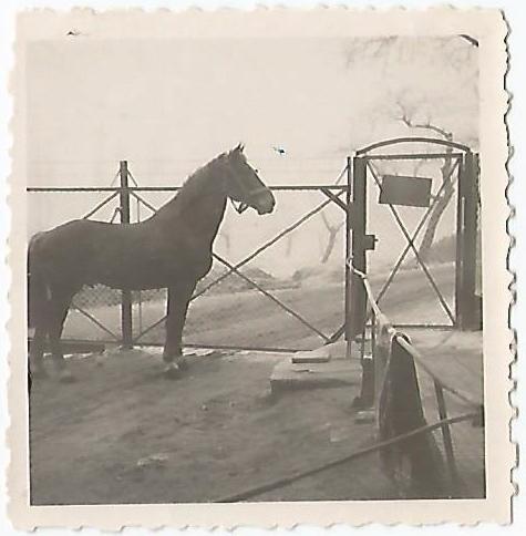 Schwarz-Weiß Foto von einem Hoftor mit Pferd im Vordergrund