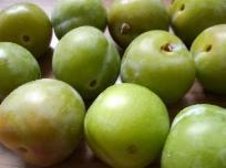 Gründe Äpfel