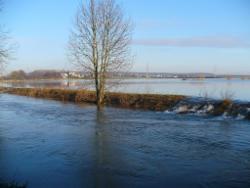 Überschwemmte Nidder im Winter mit Baum
