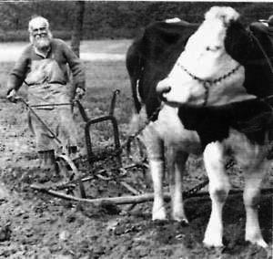 Schwarz-Weiß Foto eines Bauern mit Pflug der von einer Kuh gezogen wird