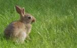 Foto eines Hasen