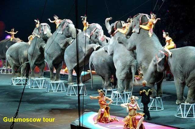 ESPECTÁCULO - El gran Circo de Moscú