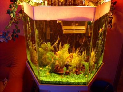 meine guppy zucht 6 eck aquarium. Black Bedroom Furniture Sets. Home Design Ideas