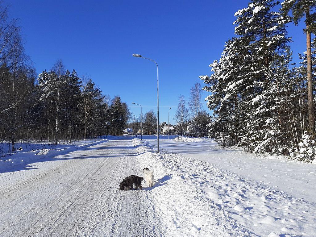 Winter 2020-2021