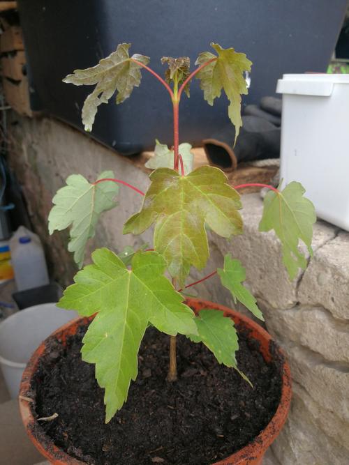 Unser erster Baum, Sommer 2019