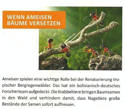 Ameisen übernehmen Verantwortung für den Wald.