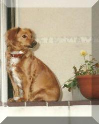Biene 5 Jahre alt. Im Jahr 2001 in Berlin.
