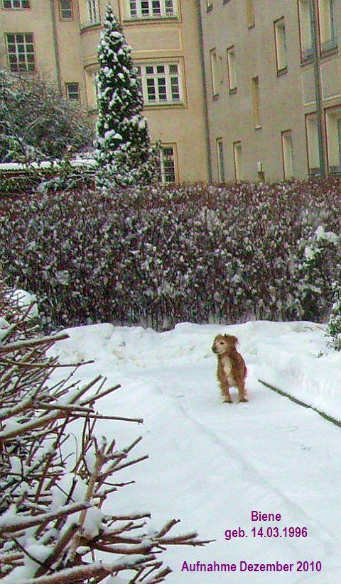 Der Schnee war toll für sie - den mochte sie sehr.