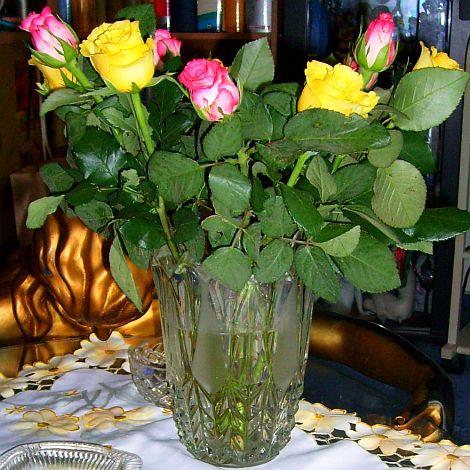 DIESE Rosen haben wir uns am 10.04.2008 geleistet :-) , anlässlich der erkämpften Aufenthaltserlaubnis !