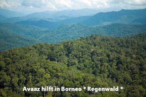 Avaaz   hilft : Regenwald auf Borneo