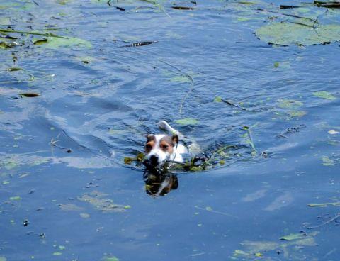 Hund schwimmt super gut - und keine Angst.