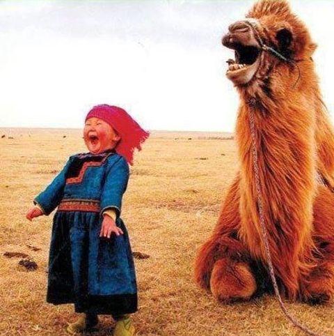 Kamel lacht