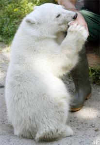 Knut braucht immer noch sehr viel Nähe und Bezug !