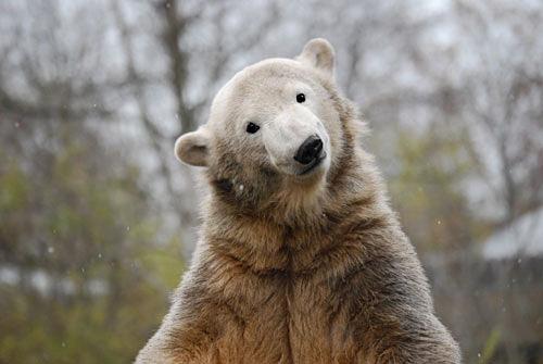 Knut zwei Jahre