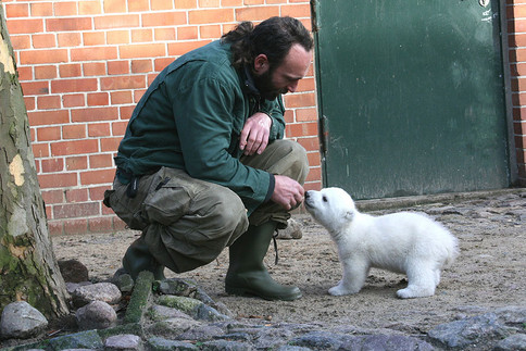 Knut - noch SO klein !