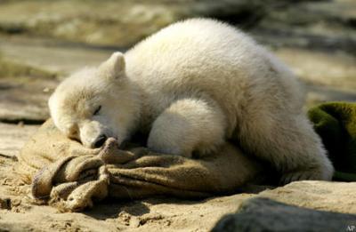 Ich bin erschöpft vom Herumtollen :-)