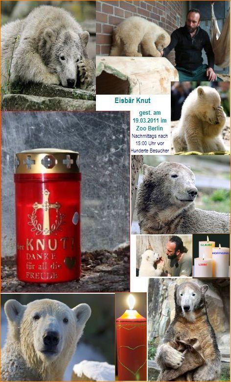 Knut ist gestorben vor seinen Besuchern......nur so können wir ein Stückchen Wahrheit erfahren.