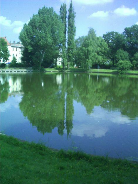Unser Park in Wilhelmsruh - einige Bäume gibt es nicht mehr - in den letzten Jahren viele einfach umgekippt ...