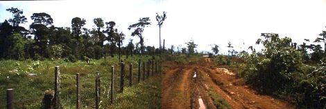 Regenwaldzerstörung  * STOPP *