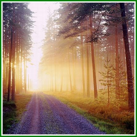 Sonnenaufgang - Morgenröte im Wald