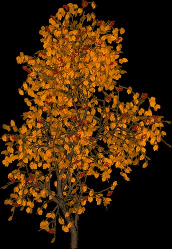 Herbstpage B 228 Ume