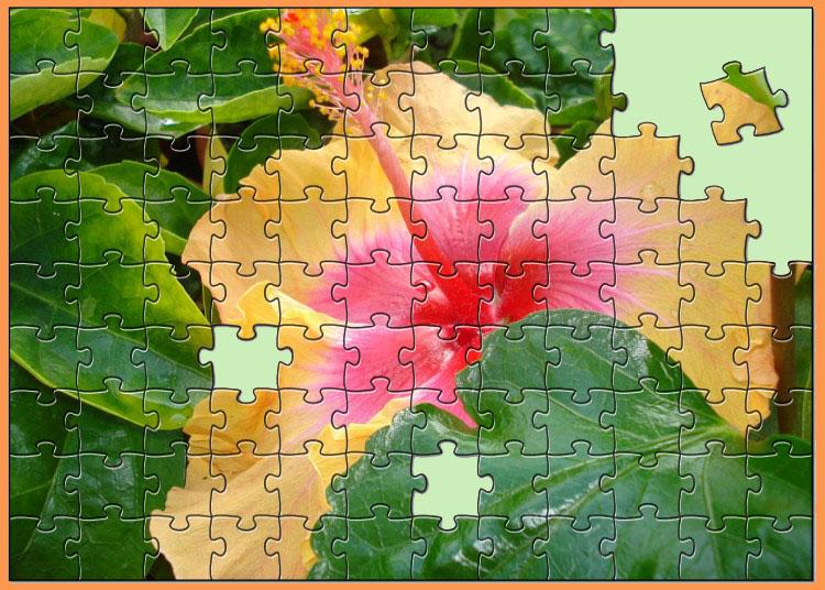 hibiskus startseite
