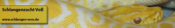 Haltung und Zucht von verschiedenen Schlangenarten