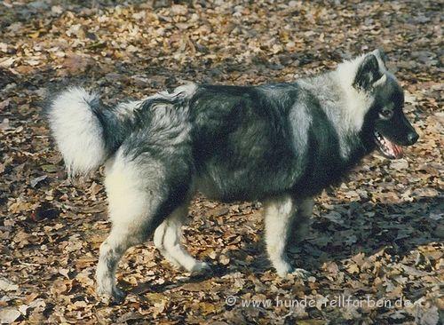 Hunde Fellfarben
