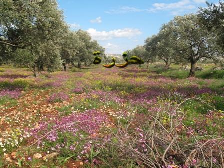 قرية حزرة حزرة حزرة الربيع