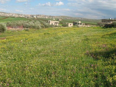 قرية حزرة-الربيع