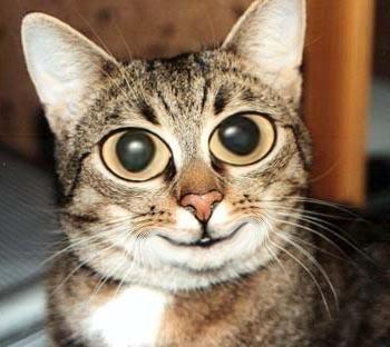 Hässliche Katzen