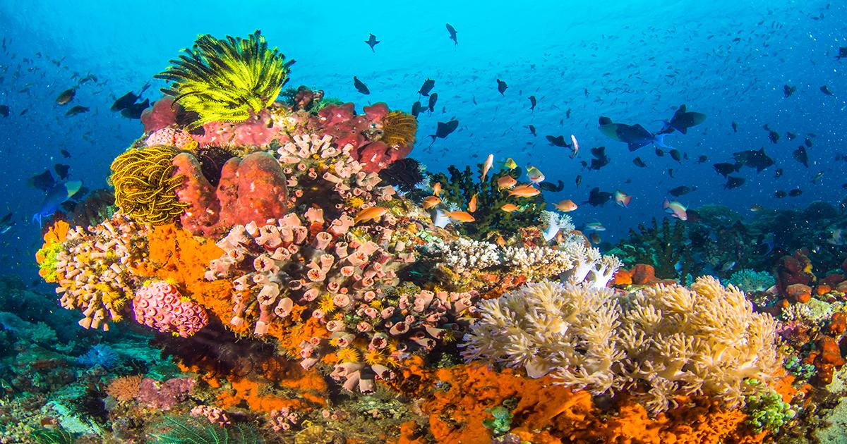 Hawaii'nin mercan resiflerinin korunması