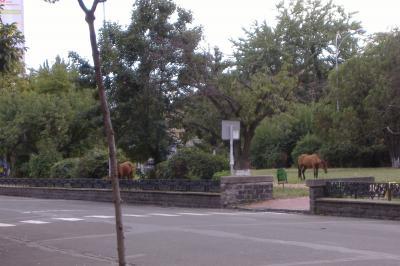 Pferde weiden im Park