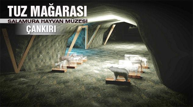 Çankırı Tuz Mağarası Salamura Hayvan Müzesi