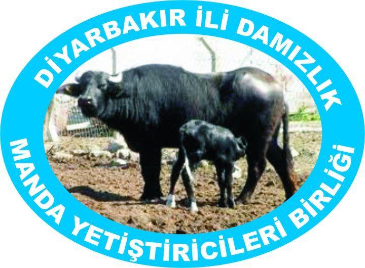 Diyarbakır Damızlık Manda Yetiştiricileri Birliği
