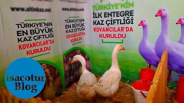 Türkiyenin En Büyük Kaz Çiftliği Kovancılarda kuruldu