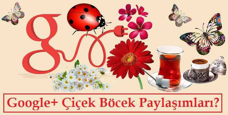 Google+ Çiçek Böcek Paylaşımları +1 Çok Almasının Nedeni