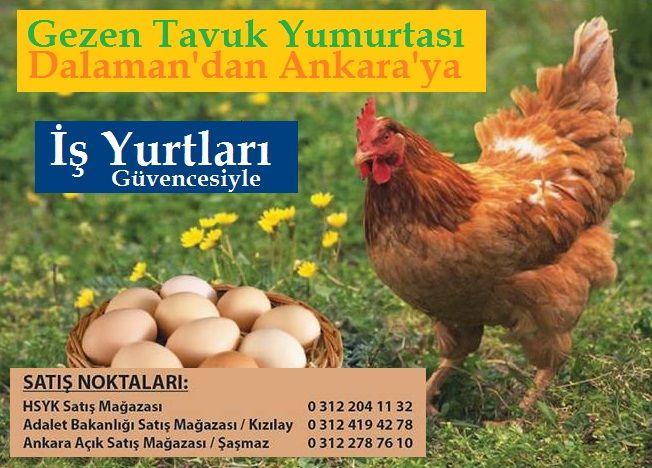 İş Yurtları Gezen Tavuk Yumurtası