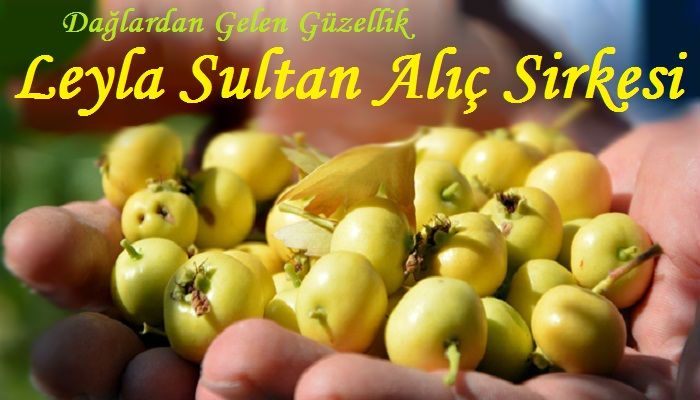 Leyla Sultan Alıç Sirkesi