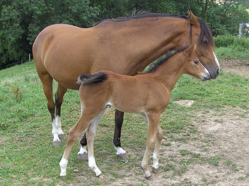 Isarons Izzibizzi mit ihrer Mutter Isarons Isabell, auf dem Bild ist Izzi gerade 8 Tage alt