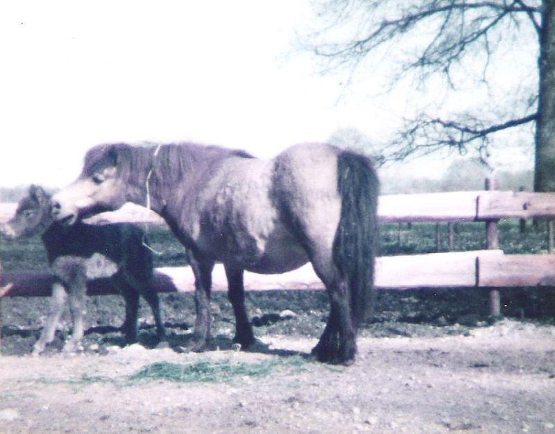 Jakoba von Bairawies im Alter von 25 Jahren mit ihrem letzten Fohlen Justine