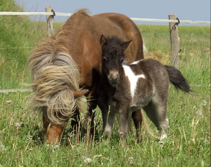 Isarons Juleika mit Mutter Jakoba, gerade 14 Tage alt.