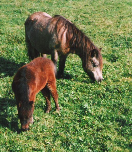Justine mit ihrer Mutter Jacoba von Bairawies