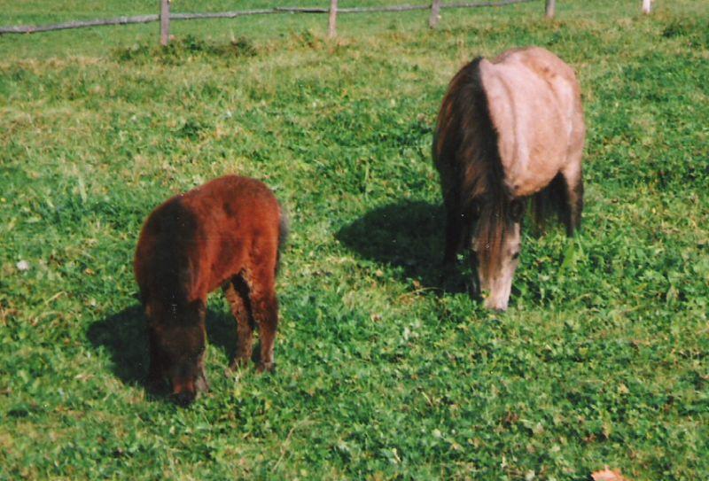 Justine als Fohlen mit ihrer Mutter Jacoba von Bairawies