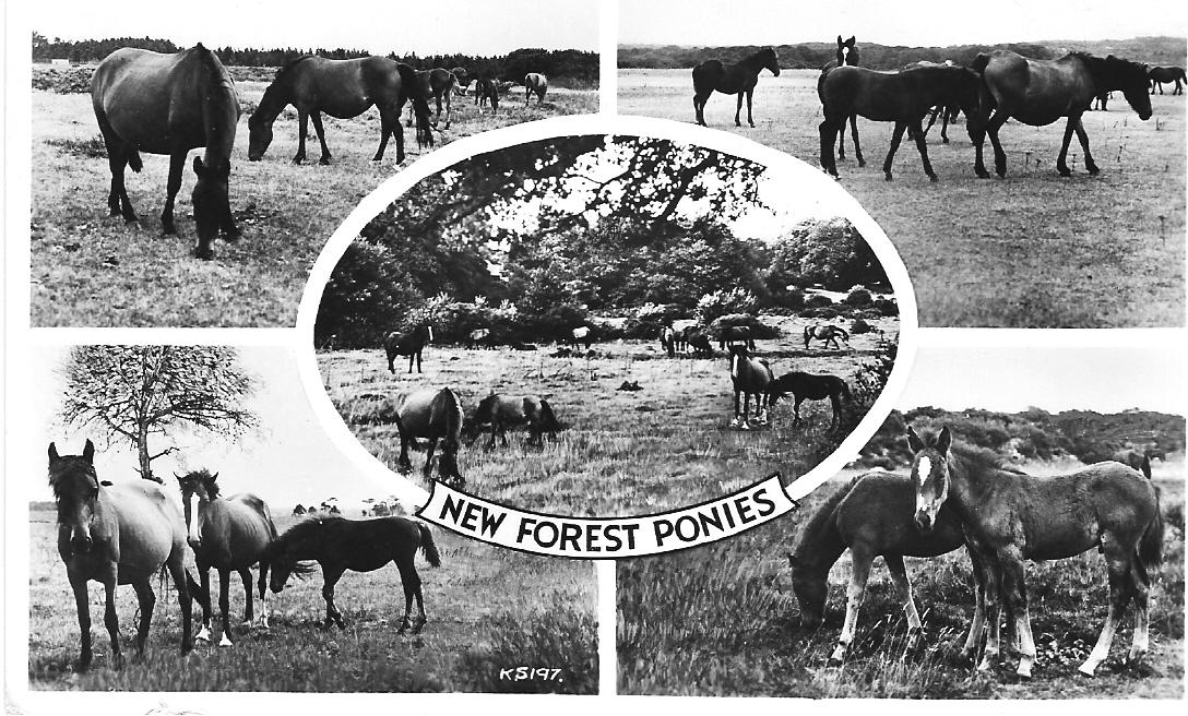 Eine Postkarte aus dem New Forest im Süden Englands.