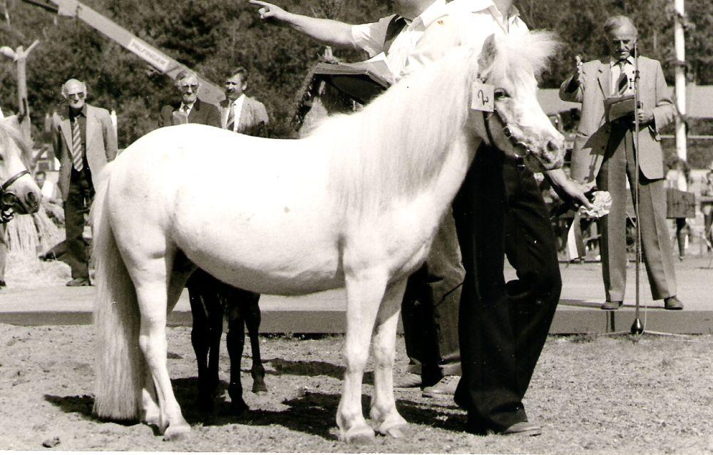 Sarotti von Bairawies