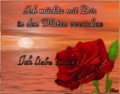 Liebessprüche mit rosen