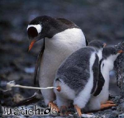 Kackender pinguin