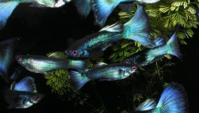 Gruppe halbwüchsiger Männchen